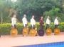 Serenatas Mariachi de Patas Blancas
